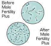 Before after male fertility plus